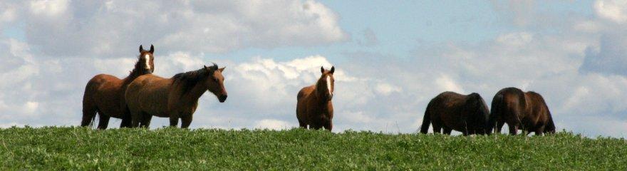 horse das pferdespiel