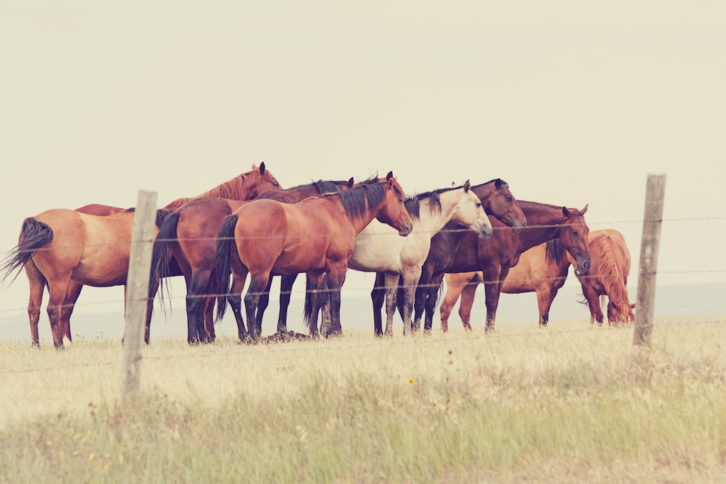 Tips for a Fidgety Horse