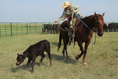 Ranch Vacations, heeling, south dakota, the dx ranch, the south dakota cowgirl