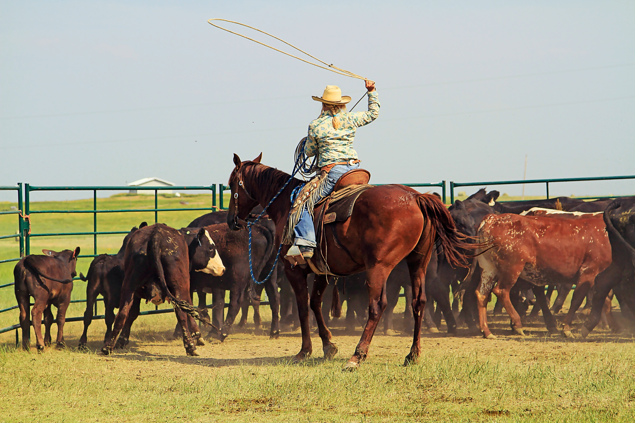 A working ranch vacation, guest thoughts, buckaroo roping, ranch roping, ranch vacations, south dakota ranch vacations