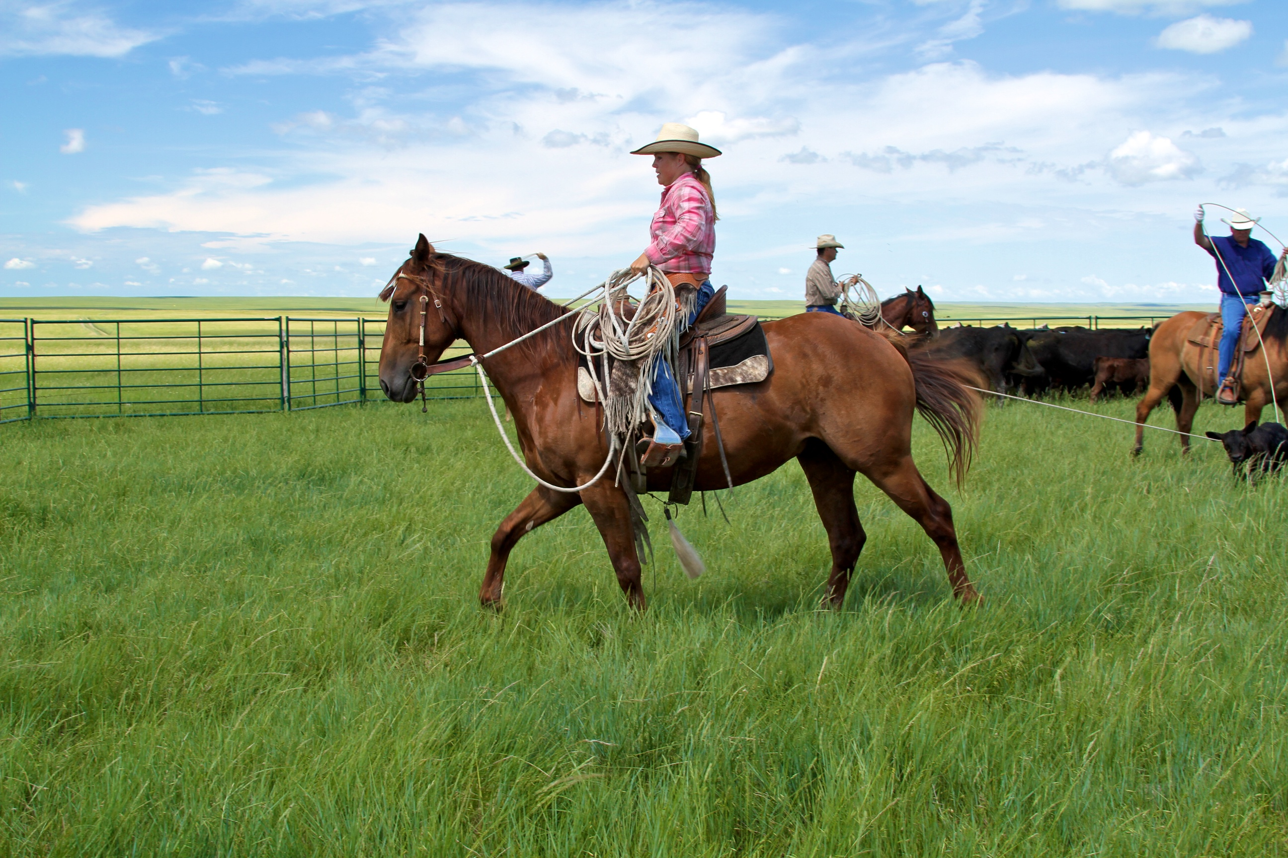 jenn zeller, the south dakota cowgirl, south dakota cowgirl photography, the dx ranch, ranch crew