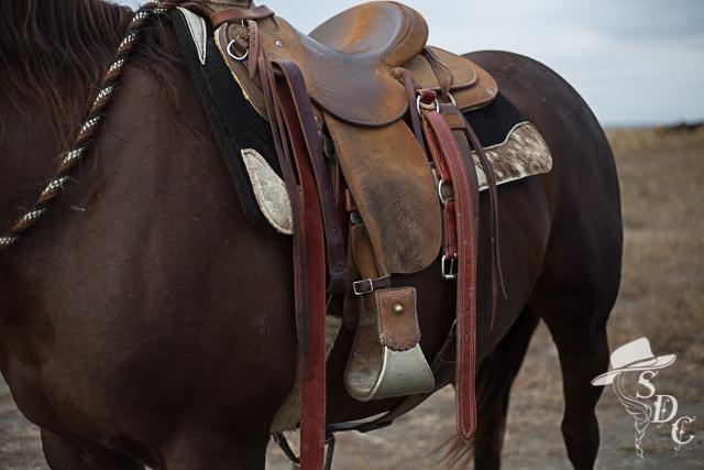 properly saddled horse, how to saddle a horse