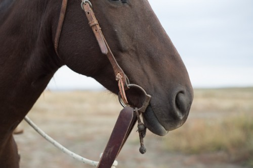 the dx ranch, snaffle bit