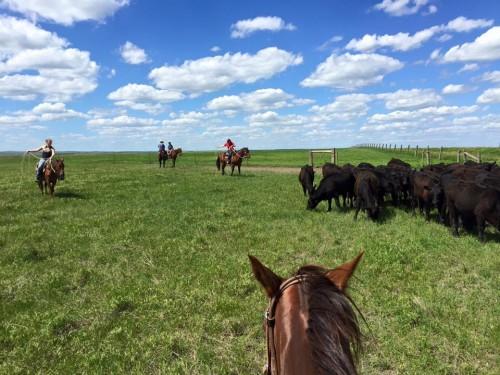 DX Ranch Intern, Emma, roping.