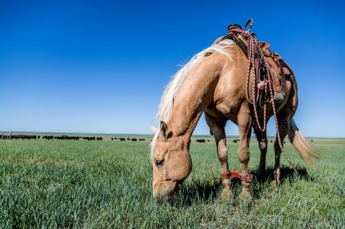 triple crown feed for ranch horses, performance horses and more