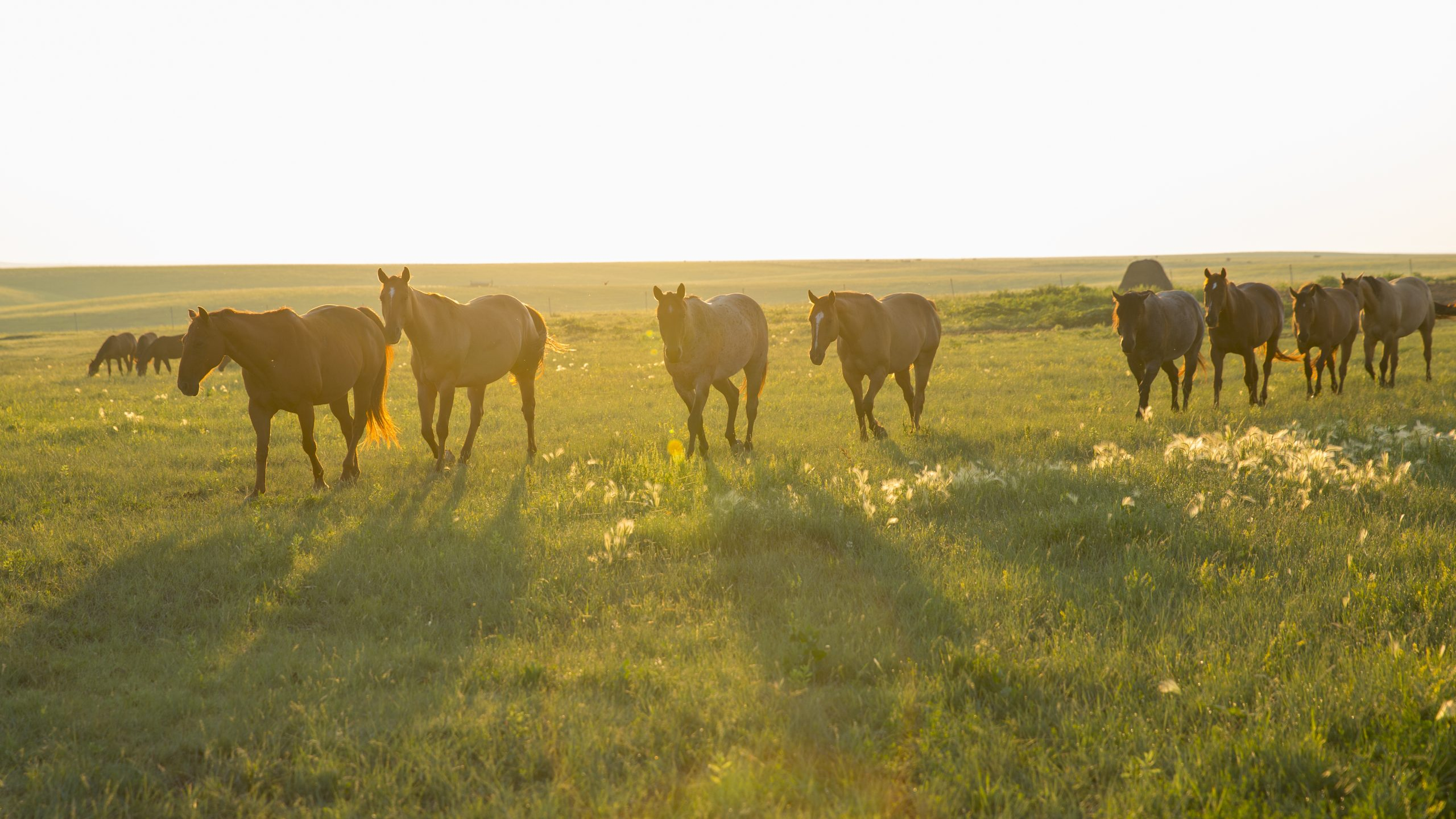 enlightenment, the horse is never wrong, the dx ranch, ducheneaux quarter horses, south dakota quarter horses