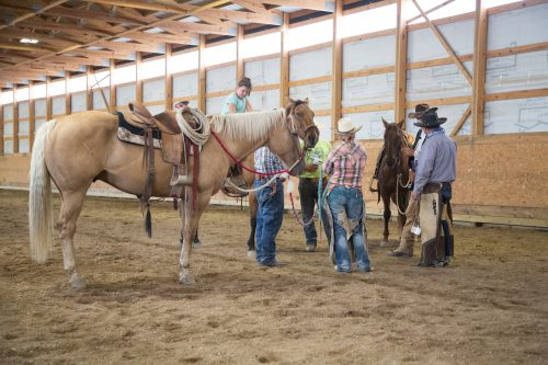 internships at the dx ranch, the dx ranch internship, ranching internship, the dx ranch