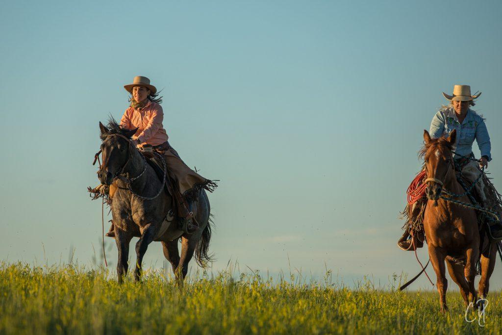 horsemanship experience